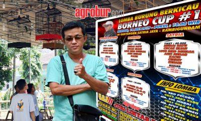 Jelang Borneo Cup #1 Jember