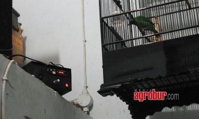 media agrobur surabaya Zona Mastering
