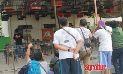 media agrobur surabaya gantangan king surabaya