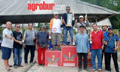 Liga Perkutut Batavia AV Cup VII Tangerang 2019