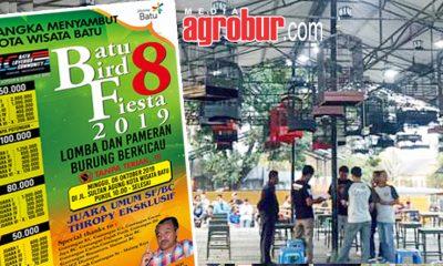 Batu Bird Fiesta 8 Malang