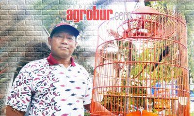 Murai Bimantoro milik Om Usman Jakarta