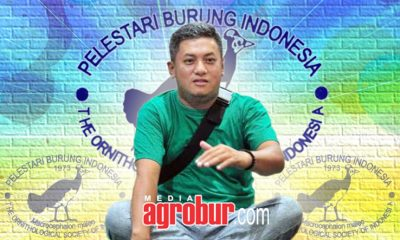 Susunan Pengurus PBI DKI Jakarta