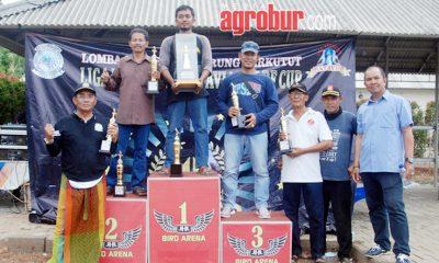 Liga Perkutut Batavia AF BF Cup 2019 BSD Tangerang