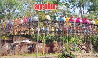 Latber Pangkat Arum Cup Probolinggo