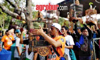 Kang Iwan Cup NzR Jakarta