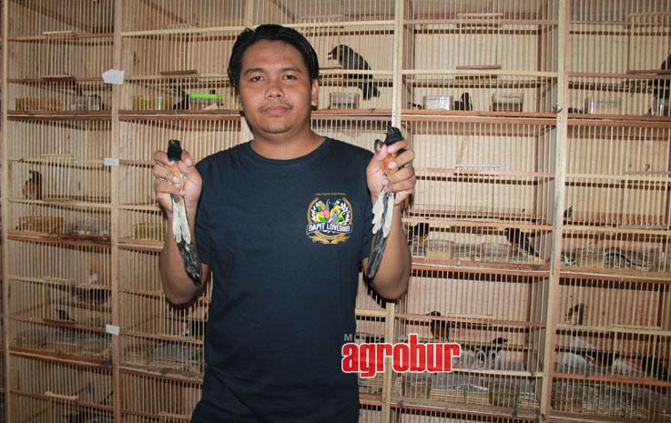 Dapit Lovebird Sidoarjo Gudangnya Burung Import Dan Segala Jenis Burung Masteran Https Mediaagrobur Com