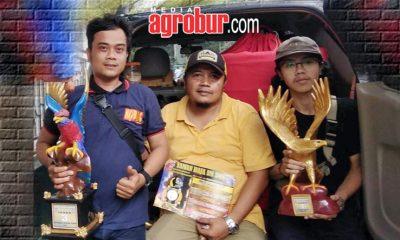 Cucak Hijau BP milik Udin Picis Jakarta