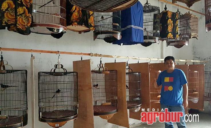 Leuser Bird Shop Pekan Baru Riau,