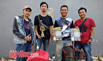 Cucak Hijau Agus Jakarta