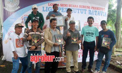 Liga Perkutut Batavia Jakarta