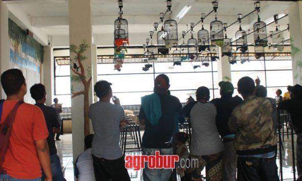 media agrobur surabaya gantangan orbird bc mr pawon surabaya