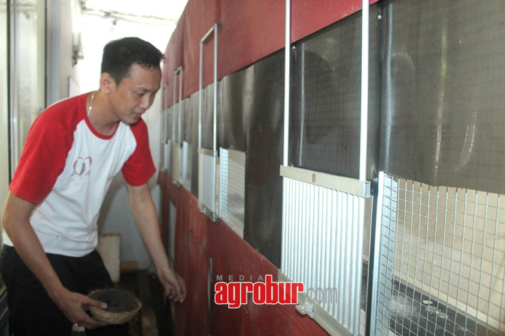media agrobur jawa barat breeding murai batu bintan arwana bf