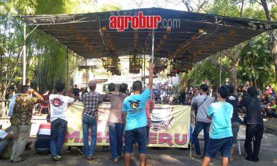 media agrobur surabaya ajang silaturahmi murai mania season 2 gantangan mahameru bc