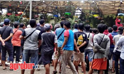 Kopdar IQ Koslet Compettion Jakarta