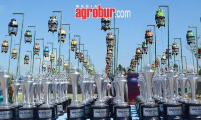 Singojoyo Cup Kalisat Jember