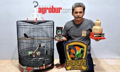 Murai Sapu Jagad Milik Mr Dedy Balung