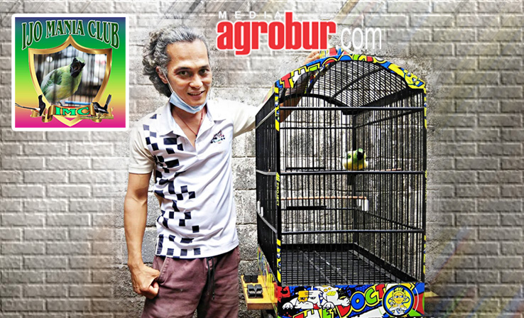 Cucak Hijau Mr Edo IMC Depok