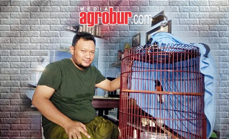 Murai Batu Mr Memed Kobac Jakarta