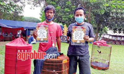 Ternak Murai Batu AW BF Jakarta