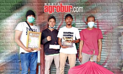Murfai Batu Pethong Muhlis Bogor