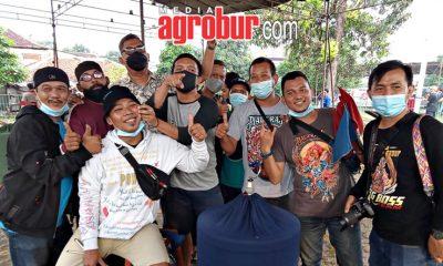 Murai Batu SPL Milik Mr Bonnie Jakarta