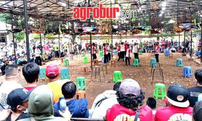 Piala Bung Hatta Bogor